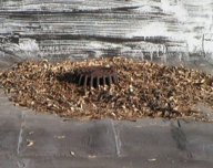 Debris around roof drain